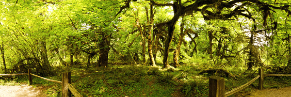 HohRainforest